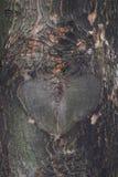 Μορφή καρδιών σε ένα δέντρο Στοκ Εικόνα