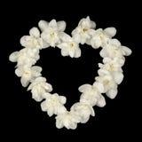 Μορφή καρδιών φιαγμένη από άσπρα λουλούδια της Jasmine στο μαύρο υπόβαθρο Στοκ Εικόνα