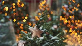 ΜΟΣΧΑ, ΡΩΣΙΑ - 6 ΔΕΚΕΜΒΡΊΟΥ: Μπεζ πλαστικό αστέρι Χριστουγέννων στον παν πυροβολισμό δέντρων έλατου Επίδραση Bokeh στο υπόβαθρο απόθεμα βίντεο