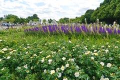 ΜΟΣΧΑ, ΡΩΣΙΑ - 26 06 2015 Πάρκο του Γκόρκυ - Central Park του πολιτισμού και του υπολοίπου Στοκ φωτογραφία με δικαίωμα ελεύθερης χρήσης