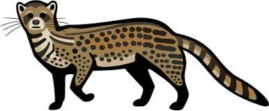 Αποτέλεσμα εικόνας για μοσχογαλή¨(civet)