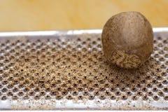 μοσχοκάρυδο ξυστών Στοκ Φωτογραφία