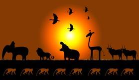 μοτίβα Αφρικανών Στοκ Εικόνα