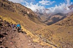 Μουλάρι που οδηγά σε μια διαδρομή στο εθνικό πάρκο Toubkal στα υψηλά βουνά ατλάντων, Μαρόκο στοκ φωτογραφίες με δικαίωμα ελεύθερης χρήσης