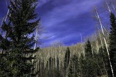 Μουντός μπλε ουρανός στοκ φωτογραφία με δικαίωμα ελεύθερης χρήσης