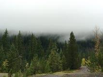 Μουντός πράσινος Στοκ εικόνα με δικαίωμα ελεύθερης χρήσης