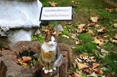 Μουσείο αρχαιολογίας Παρακαλώ μην αγγίξτε τα χειροποίητα αντικείμενα Γάτες μπροστά από το σημάδι Στοκ Εικόνες
