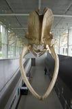 Μουσείο βιοποικιλότητας Beaty Στοκ φωτογραφίες με δικαίωμα ελεύθερης χρήσης