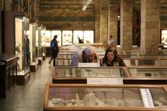 μουσείο ιστορίας φυσι&kapp Στοκ Εικόνα