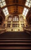 Μουσείο φυσικής ιστορίας του Λονδίνου - βήματα που οδηγούν στην εξέλιξη Στοκ εικόνα με δικαίωμα ελεύθερης χρήσης