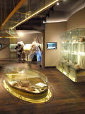 Μουσείο Archeological, Lublin, Πολωνία Στοκ εικόνα με δικαίωμα ελεύθερης χρήσης