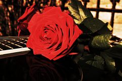 Μουσική και κομψότητα στοκ εικόνες με δικαίωμα ελεύθερης χρήσης