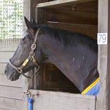 Μουσικό άλογο γύρου RCMP στοκ εικόνες με δικαίωμα ελεύθερης χρήσης