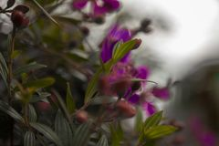 Μουτζουρωμένα πράσινα φύλλα και πορφυρά λουλούδια στον αέρα Στοκ φωτογραφία με δικαίωμα ελεύθερης χρήσης