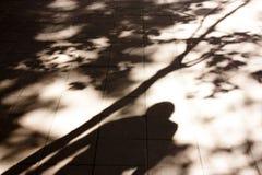 Μουτζουρωμένες σκιές και σκιαγραφίες πόλεων φθινοπώρου Στοκ Εικόνες