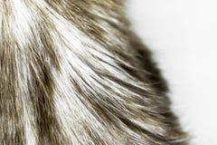 Μουτζουρωμένη και θορυβώδης μπεζ επιφάνεια υποβάθρου γουνών γατών χρώματος στοκ εικόνα με δικαίωμα ελεύθερης χρήσης