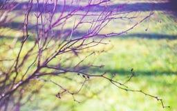 Μουτζουρωμένοι γυμνοί κλάδοι δέντρων Στοκ φωτογραφίες με δικαίωμα ελεύθερης χρήσης