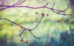 Μουτζουρωμένοι γυμνοί κλάδοι δέντρων Στοκ φωτογραφία με δικαίωμα ελεύθερης χρήσης