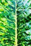 Μουτζουρωμένος χρωματίζοντας έναν οργανικό του πράσινου υποβάθρου leafe Στοκ Εικόνα