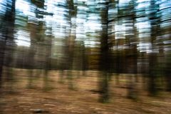 Μουτζουρωμένο δασικό αφηρημένο τοπίο πεύκων κινήσεων Στοκ Φωτογραφία
