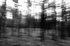 Μουτζουρωμένο δασικό αφηρημένο τοπίο πεύκων κινήσεων Στοκ φωτογραφία με δικαίωμα ελεύθερης χρήσης