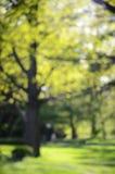 Μουτζουρωμένο πάρκο άνοιξη υποβάθρου Στοκ εικόνα με δικαίωμα ελεύθερης χρήσης
