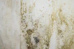 Μουχλιασμένοι τοίχοι στοκ εικόνα με δικαίωμα ελεύθερης χρήσης