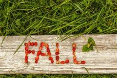 Μούρα πτώσης και καλοκαιριού Υπόβαθρο Eco για το κείμενο Στοκ Φωτογραφία