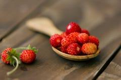 Μούρα της άγριας φράουλας σε ένα ξύλινο κουτάλι Στοκ Εικόνα