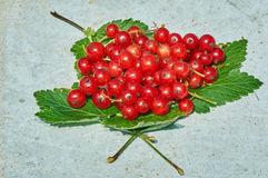 Μούρα της κόκκινης σταφίδας στα πράσινα φύλλα στοκ εικόνες