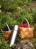 μούρα φθινοπώρου Στοκ εικόνα με δικαίωμα ελεύθερης χρήσης