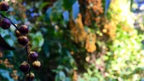 μούρα ώριμα Στοκ φωτογραφία με δικαίωμα ελεύθερης χρήσης