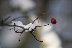 Μούρο στο χιόνι στοκ φωτογραφίες με δικαίωμα ελεύθερης χρήσης