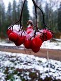Μούρο τέφρας Στοκ Φωτογραφία