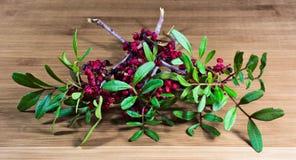 Μούρο, φθινόπωρο, δάσος, ξύλα, χρώματα Στοκ Εικόνα
