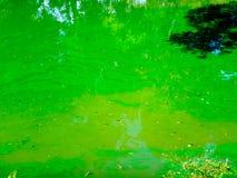 Μολυσμένη λίμνη με τον αφρό και τα άλγη Στοκ φωτογραφίες με δικαίωμα ελεύθερης χρήσης