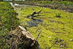 Μολυσμένος ποταμός. Στοκ φωτογραφίες με δικαίωμα ελεύθερης χρήσης