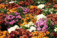 Μπάλωμα λουλουδιών Στοκ φωτογραφία με δικαίωμα ελεύθερης χρήσης