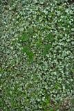 μπάλωμα τριφυλλιού Στοκ φωτογραφίες με δικαίωμα ελεύθερης χρήσης