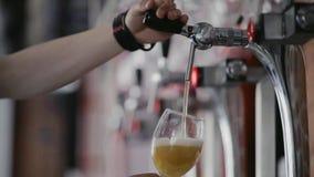 Μπάρμαν που γεμίζει την καθαρή κούπα μπύρας με την μπύρα στο μπαρ τέλεια υπηρεσία Κατοχή της διασκέδασης, χόμπι απόθεμα βίντεο