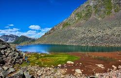Μπάλωμα της πράσινης χλόης στην άκρη μιας λίμνης βουνών Στοκ Φωτογραφίες