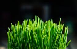 Μπάλωμα της φρέσκιας πράσινης χλόης Στοκ Φωτογραφίες