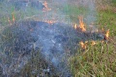 Μπάλωμα του καψίματος της χλόης Στοκ φωτογραφία με δικαίωμα ελεύθερης χρήσης
