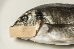 Μπάλωμα ψαριών στοκ φωτογραφίες με δικαίωμα ελεύθερης χρήσης