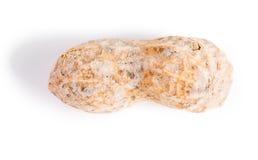 Μπέιζ-μπώλ: Ενιαίο απομονωμένο φυστίκι Στοκ εικόνα με δικαίωμα ελεύθερης χρήσης
