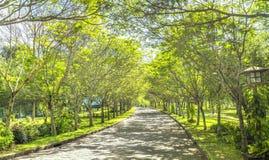 Μπαγαπόντικοι δρόμοι στο πάρκο Στοκ Φωτογραφίες