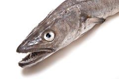 μπακαλιάροι ψαριών στοκ εικόνα