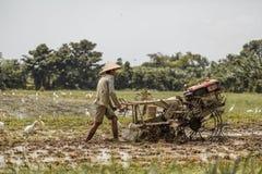 Μπαλί/Ινδονησία - 03 05 2018: το άτομο οργώνει τον τομέα με μεγάλο ένας μηχανή-φραγμός Στοκ Εικόνες