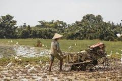 Μπαλί/Ινδονησία - 03 05 2018: το άτομο οργώνει τον τομέα με μεγάλο ένας μηχανή-φραγμός Στοκ εικόνες με δικαίωμα ελεύθερης χρήσης