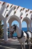 μπαλκόνι Ευρώπη nerja Ισπανία της Ανδαλουσίας Στοκ Φωτογραφία